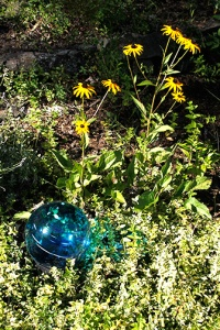 Blue Glass w Rudbeckia web
