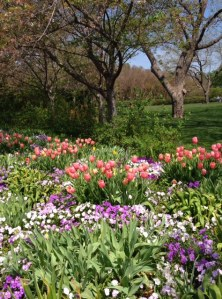 Spring is in full bloom in Texas at the Dallas Arboretum. If you can't make a long trip check out the Tower Hill Botanical Gardens in Boylston, MA. They have blooming plants in their conservatory.