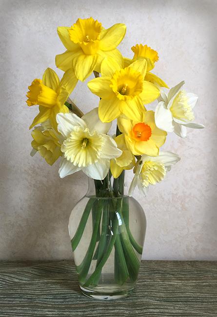 2016 Daffodil